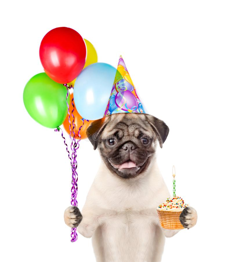 Dog in birthday hat holding balloons and cake. isolated on white background.  stock photography