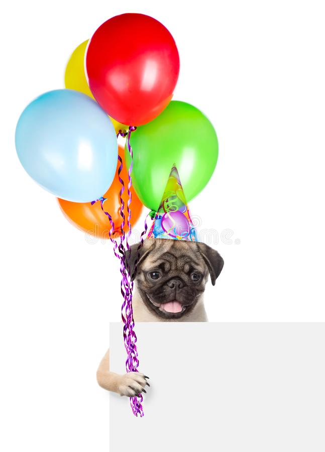 Dog in birthday hat holding balloons peeking from behind empty b royalty free stock image