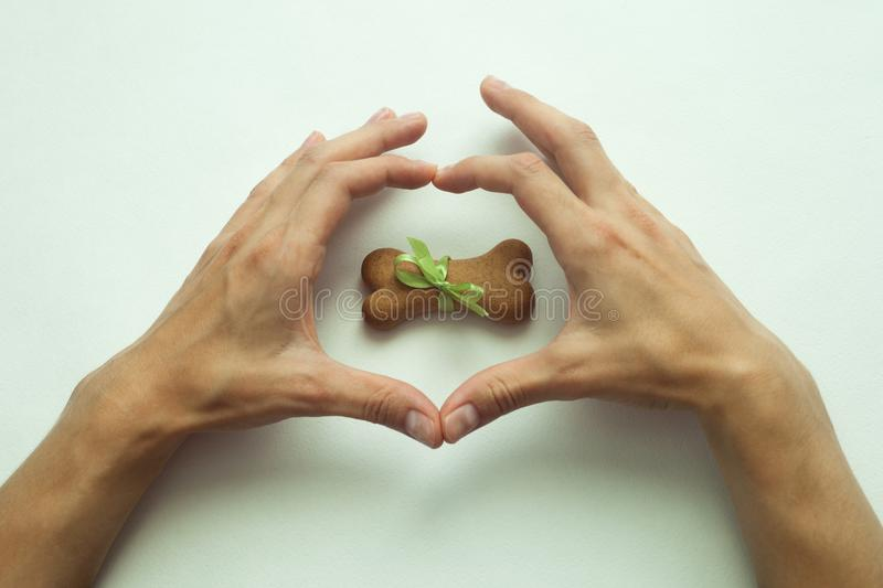 Dog biscuits bone shaped wrapped as gift in heart shape hands. royalty free stock photo