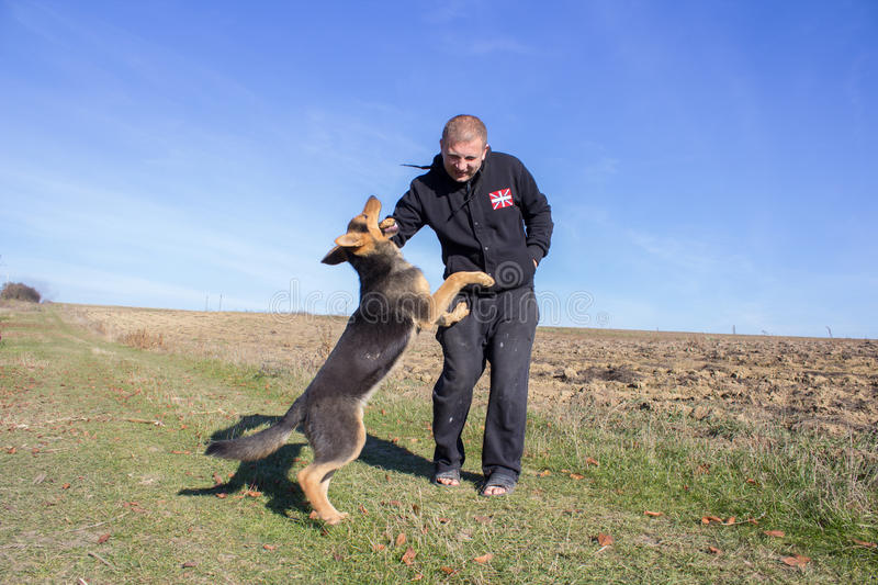 Dog bites the hand. Aggressive attack dog shepherd biting on man's hand stock images