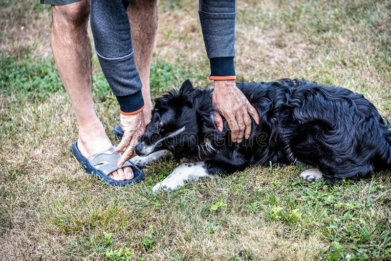 The dog bites the man`s hand. A man playing with a dog on a green lawn.  stock photography