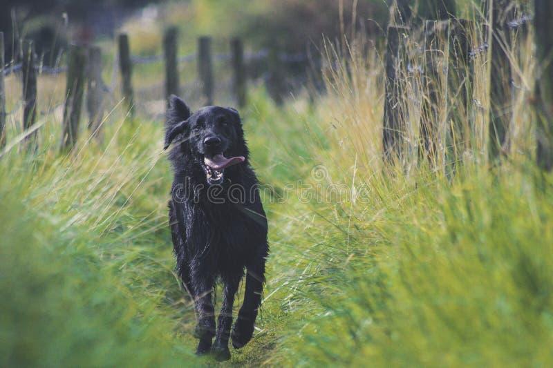 Dog, Black, Dog Like Mammal, Dog Breed Free Public Domain Cc0 Image