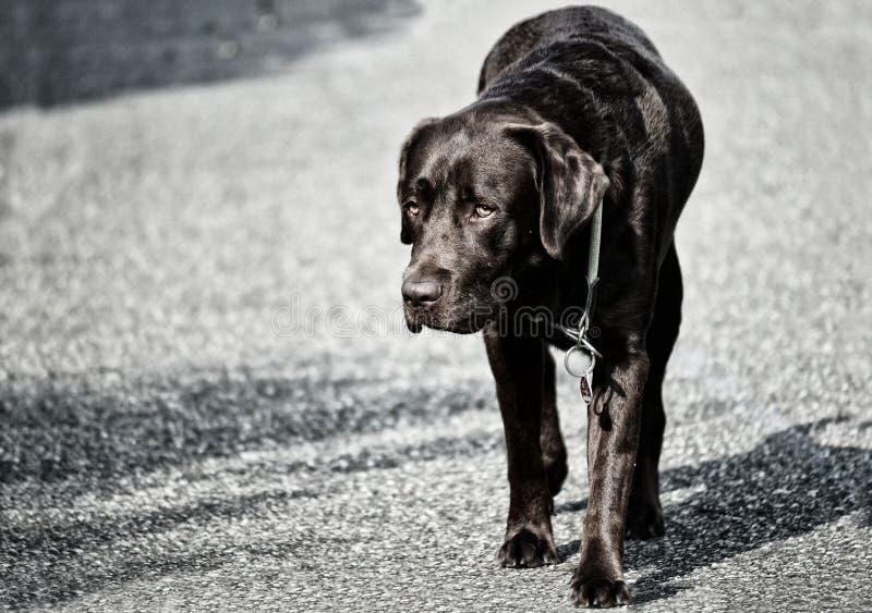 Dog, Black, Black And White, Mammal stock photography