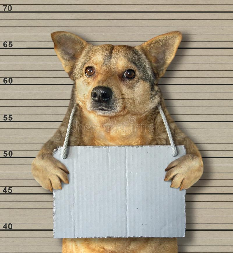 Dog with a blank sign in a jail. The dog with a blank sign around his neck in the prison. Lineup background stock photography
