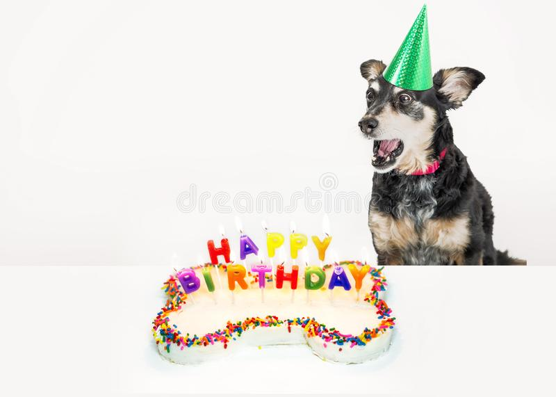 Dog Blowing Out Birthday Candles royalty free stock photography