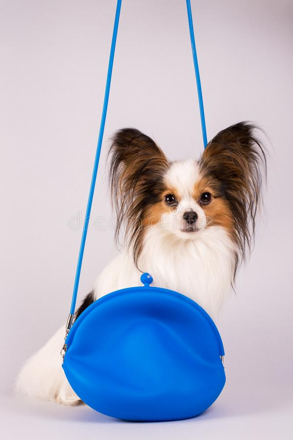 Dog in a blue bag stock photos