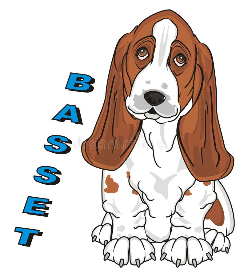 Dog and blue word. Cute basset hound sit with blue word basset vector illustration