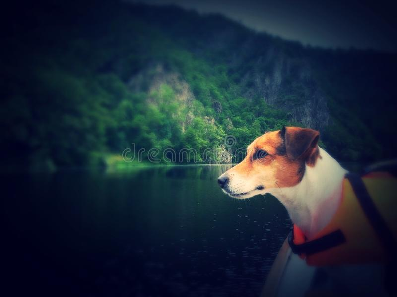 Dog on a boat royalty free stock images