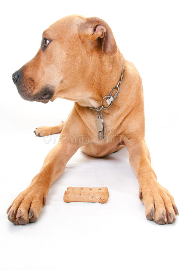 Download Dog and bone stock photo. Image of puppy, mutt, lying - 18292476