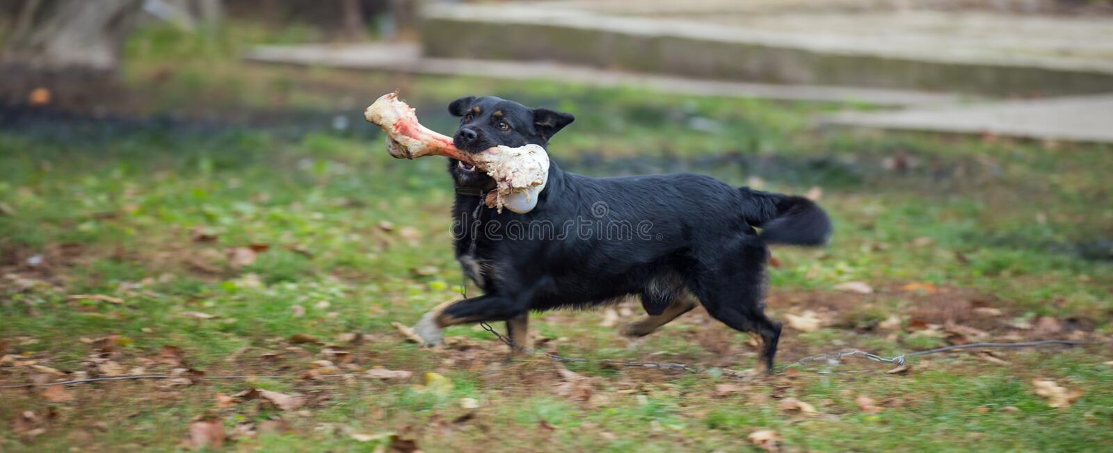 Dog and bone stock photo