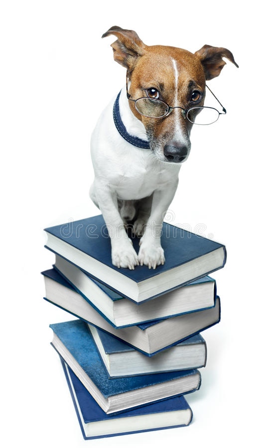 Dog on a book stack. Dog standing on a book stack