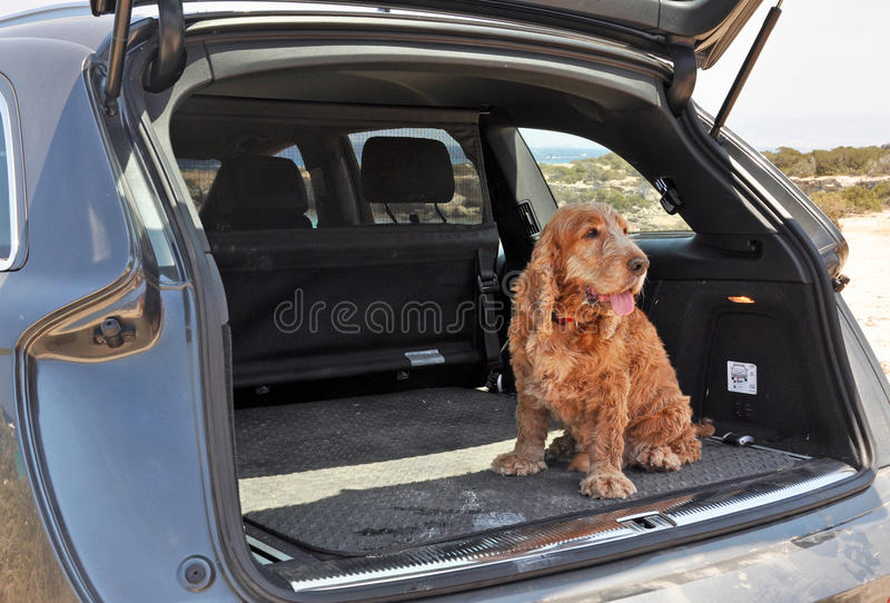 Dog in a Boot stock photo