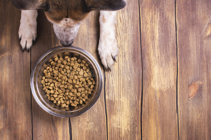 Dog and bowl of dry kibble food royalty free stock photography