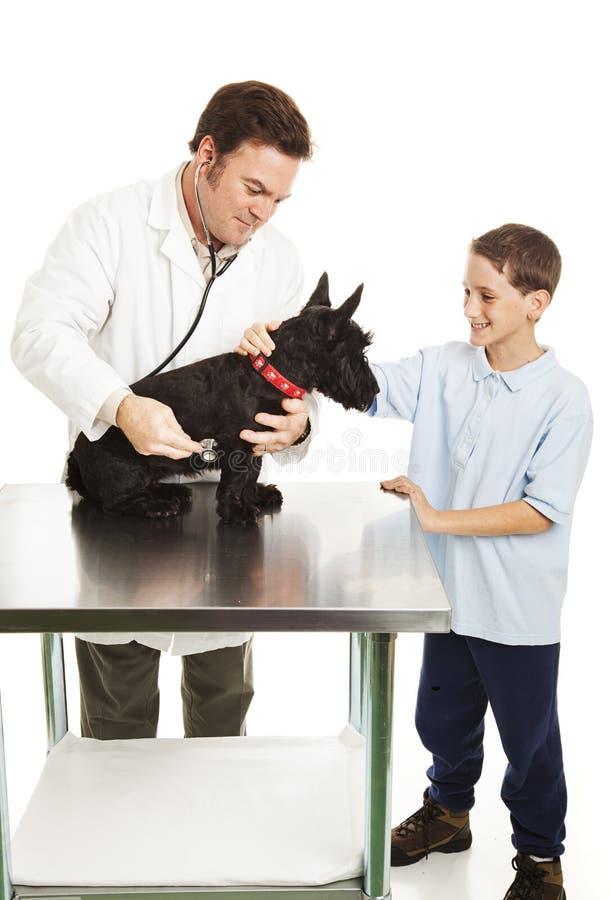 Dog and Boy at Vet stock image