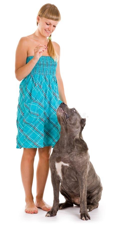 Dog breed stock photo