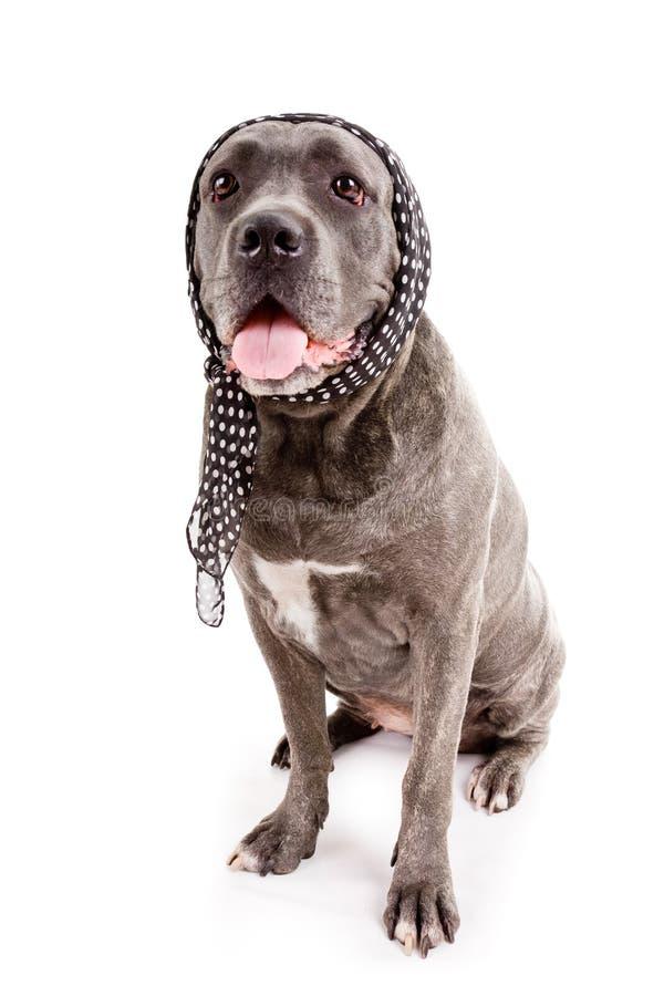 Dog breed stock photography
