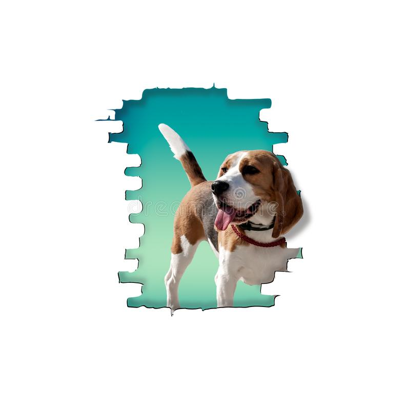 The dog breed beagle peeps stock photo