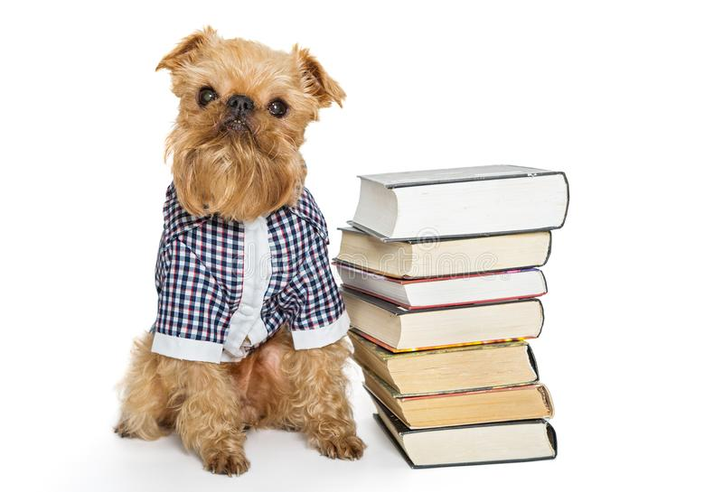 Dog breed and books stock photos