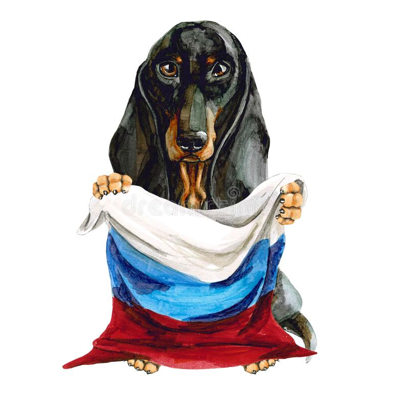 Dog breed dachshund holds in his hands the flag of Russia. Russian Federation. Moscow. Isolated royalty free illustration