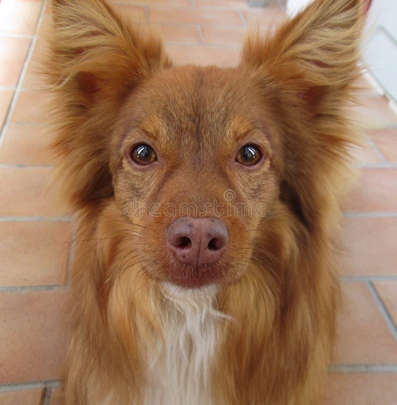 Dog, Dog Breed, Dog Breed Group, Dog Like Mammal royalty free stock photos
