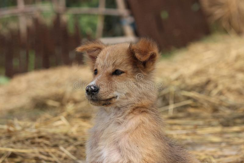 Dog Breed, Dog Breed Group, Dog Like Mammal, Dog stock photography