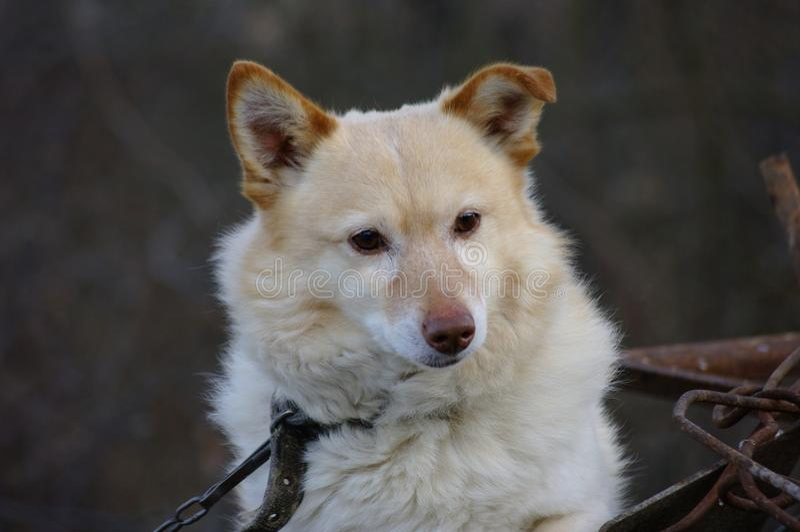 Dog Breed, Dog, Dog Breed Group, Dog Like Mammal royalty free stock photos