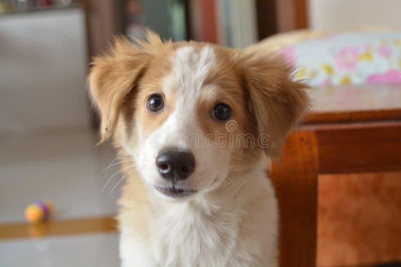 Dog, Dog Breed, Dog Breed Group, Dog Like Mammal royalty free stock image