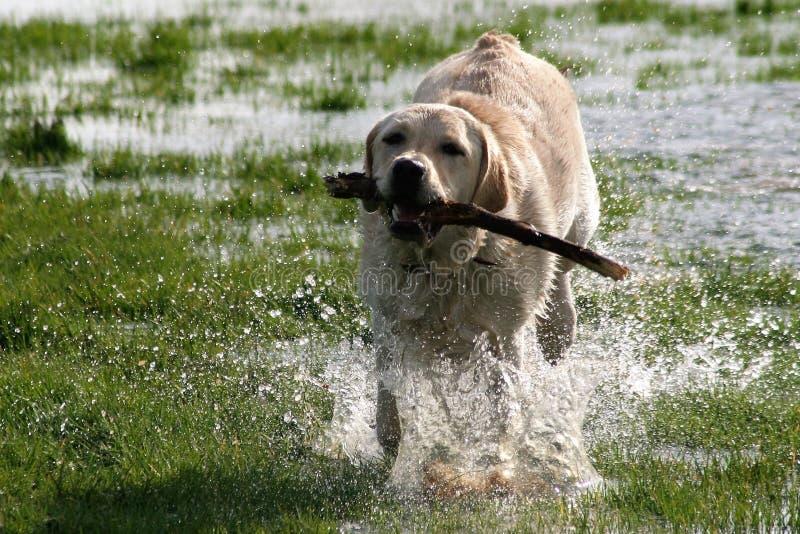 Dog, Dog Breed Group, Dog Like Mammal, Fauna stock images