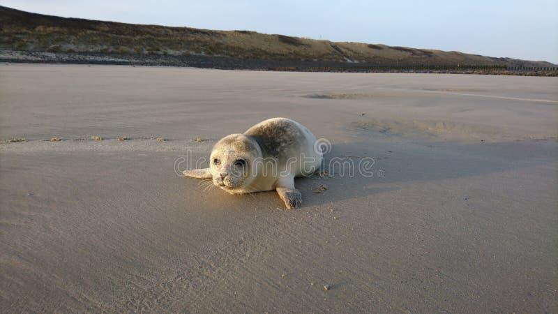 Dog Breed Group, Dog, Dog Like Mammal, Shore royalty free stock photo