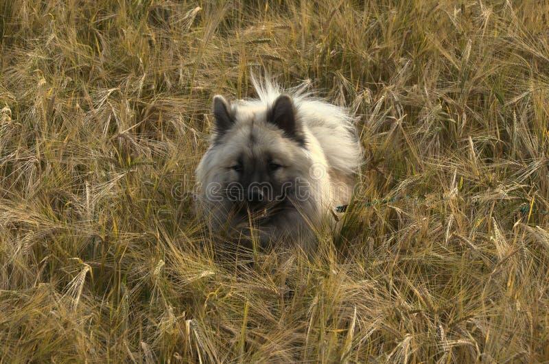 Dog Breed Group, Wildlife, Dog Like Mammal, Fauna Free Public Domain Cc0 Image