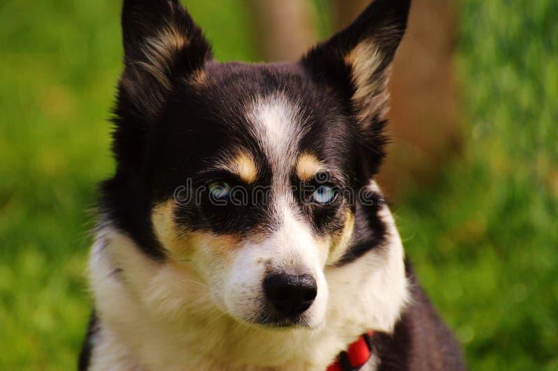 Dog, Dog Breed, Dog Like Mammal, Dog Breed Group Free Public Domain Cc0 Image