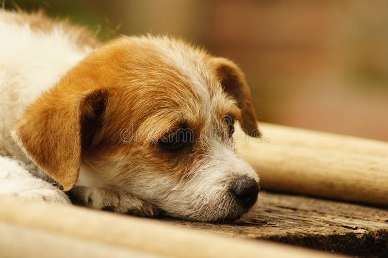 Dog, Dog Breed, Dog Like Mammal, Puppy Free Public Domain Cc0 Image