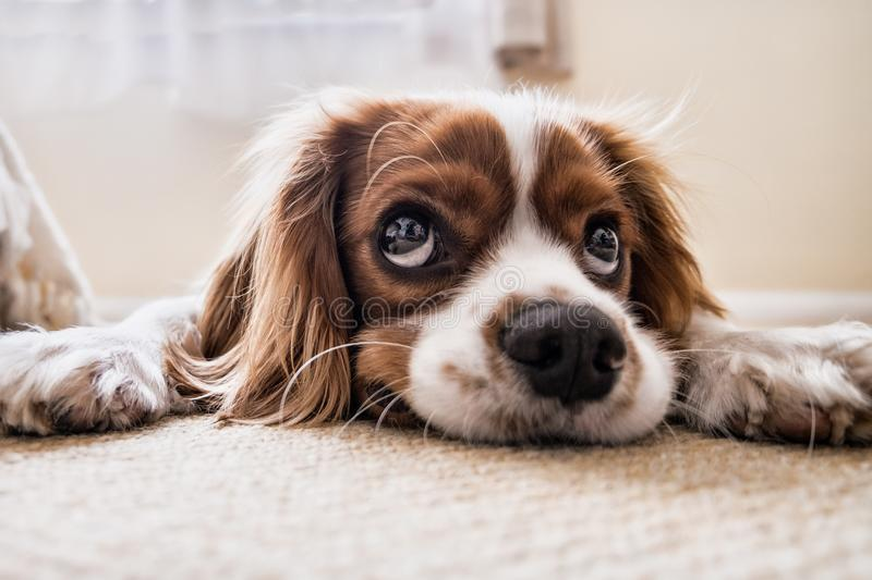 Dog, Dog Breed, Nose, Dog Like Mammal