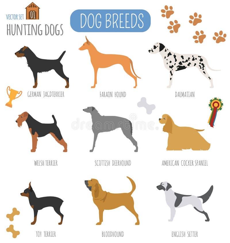 Dog breeds. Hunting dog set icon. Flat style royalty free illustration