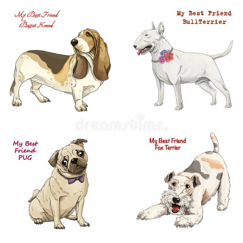 Dog breeds set basset hound, bull terrier, fox terrier, pug stock illustration