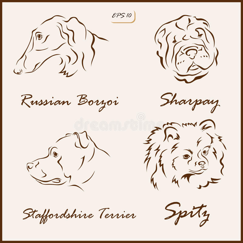 The dog breeds. Set of a vector Illustration shows a dog breeds. Russian Borzoi, Sharpay, Spitz, Staffordshire Terrier stock illustration
