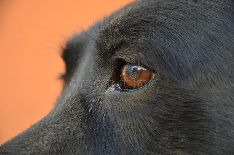 Dog brown eyes stock photos
