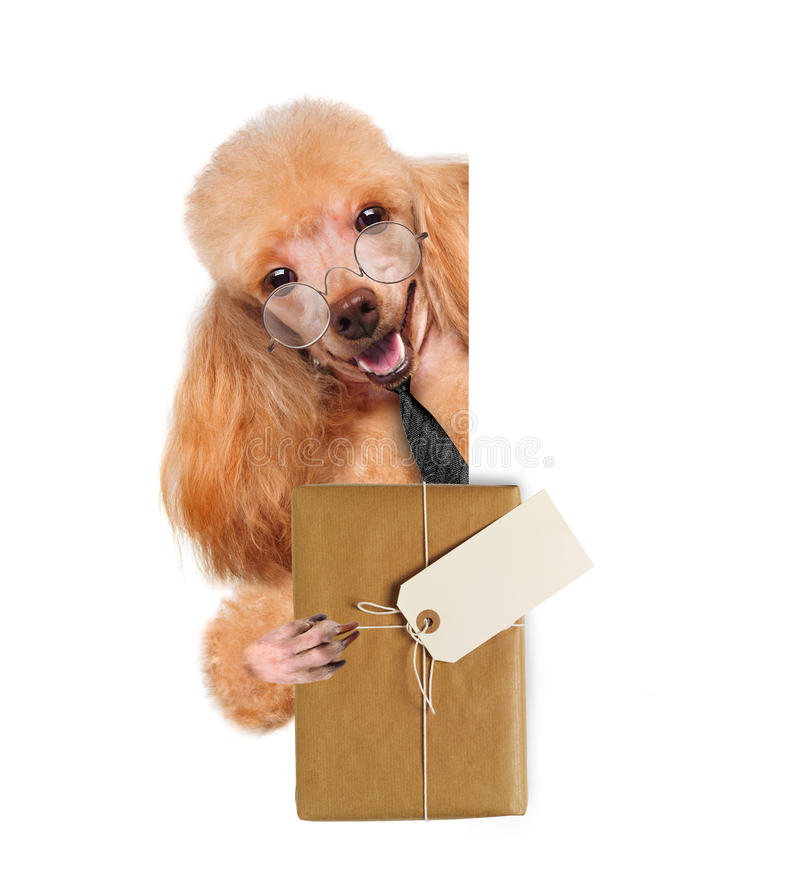 Dog with brown paper parcels delivery. The white banners stock images