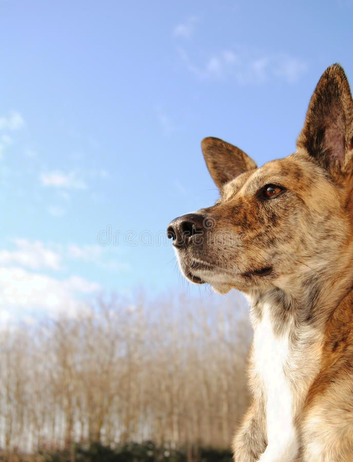 Dog brown and sky royalty free stock photography