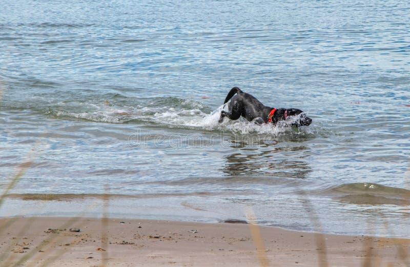 Dog bubbles in the sea stock photo