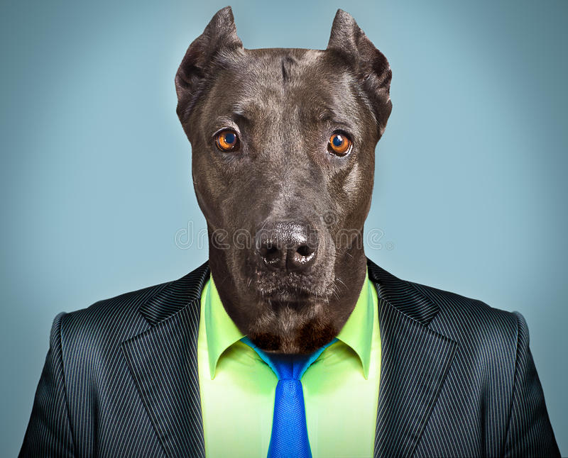 Dog in business suit stock photo