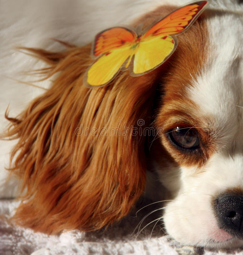 Dog and Butterfly royalty free stock photos