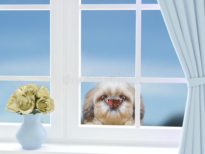 Dog with butterfly on nose looking through the window. Cute dog with butterfly on nose looking through the window stock photo