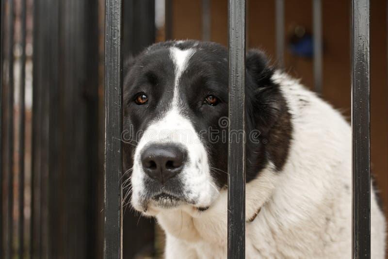 Dog cage stock photo