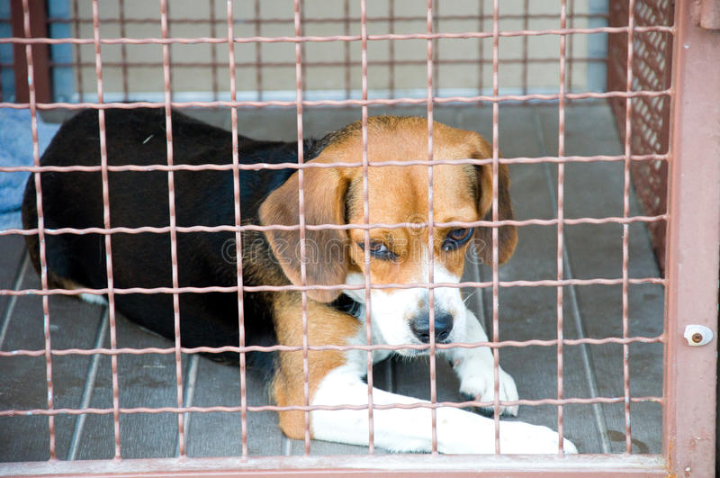 Download Dog cage stock photo. Image of cute, head, animals, kennel - 19592330