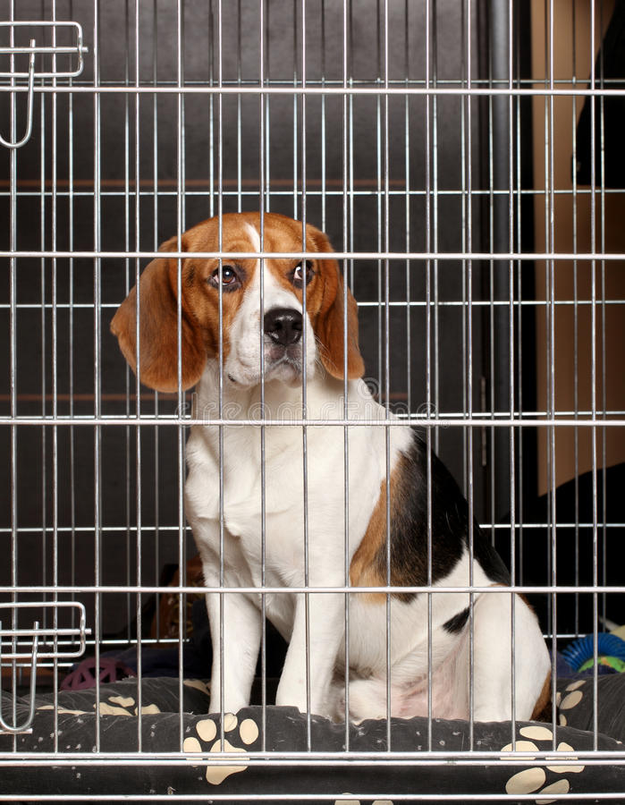 Download Dog in cage stock image. Image of kennel, ears, depression - 23852855