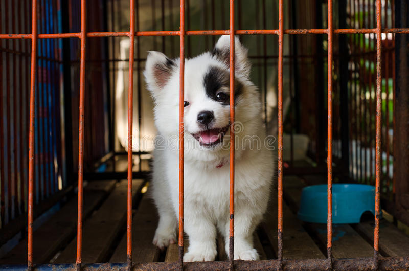 Dog in cage. Closeup of a dog cage royalty free stock images