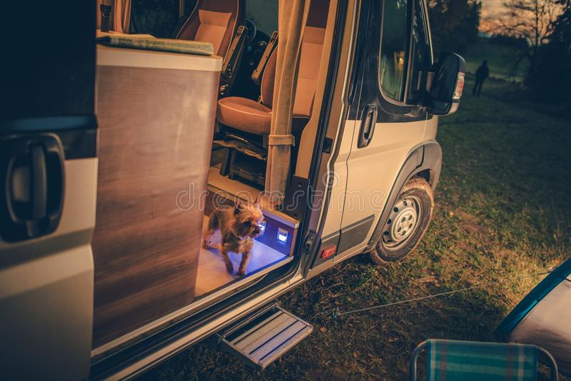 Dog in the Camper Van royalty free stock photos