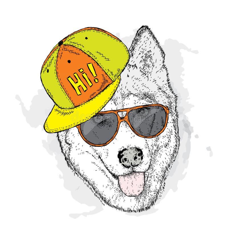 Dog in cap and glasses. Vector illustration. Cute Husky. vector illustration