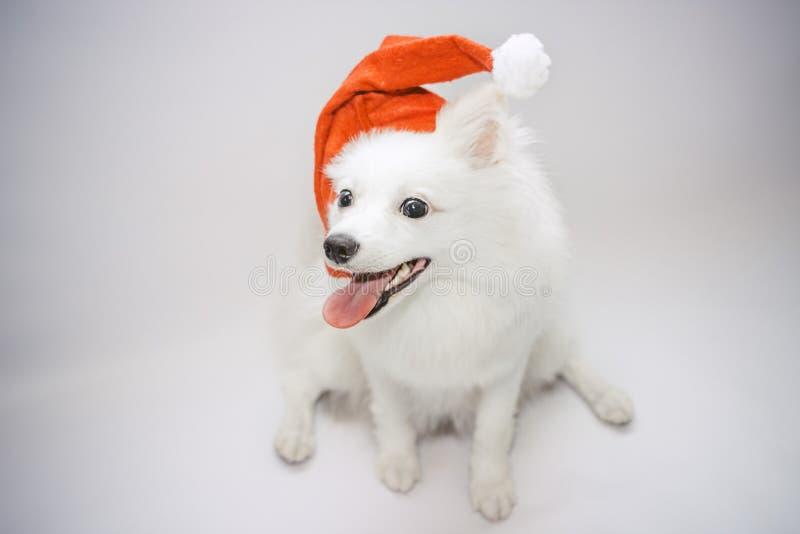 A dog in the cap of Santa stock photos